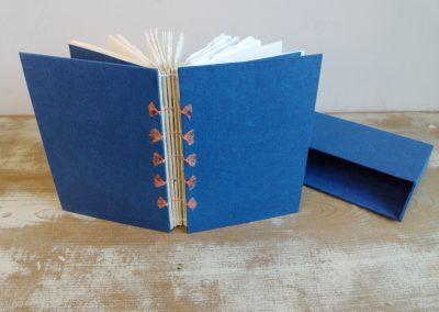 41 藍草紙